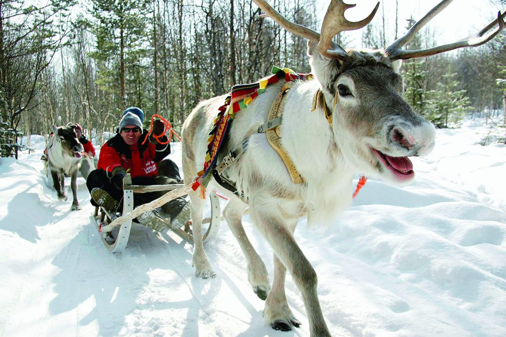Sleigh Ride in Lapland