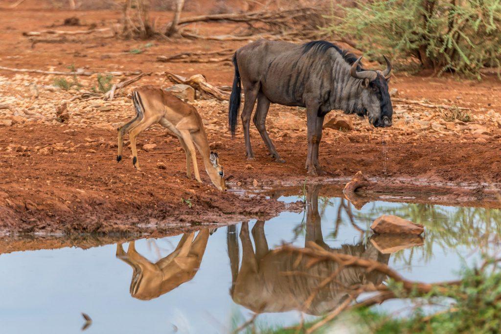 Amazing wildlife in Namibia